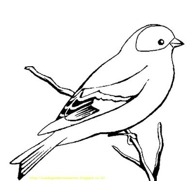 Gambar Mewarnai Burung -