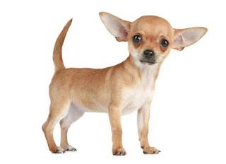 Породы собак маленьких размеров