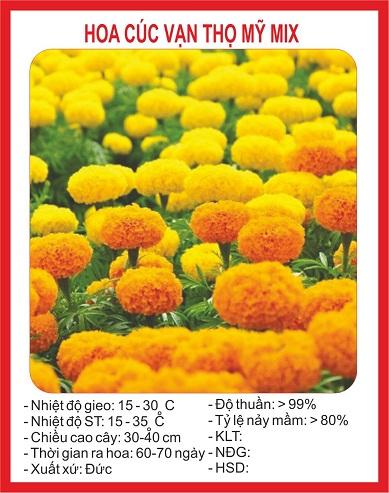 Hình ảnh trên bao bì gói hạt giống hoa Cúc vạn thọ mỹ