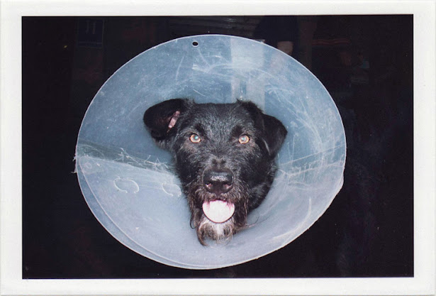 dirty photos - upon - flash street photo of dog's head in plastic hat in granada