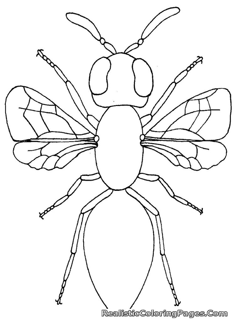 Coloring Book Pages Insects Realistic Insect Coloring Pages Realistic Coloring Pages