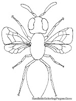 free printable insect coloring pages for kids