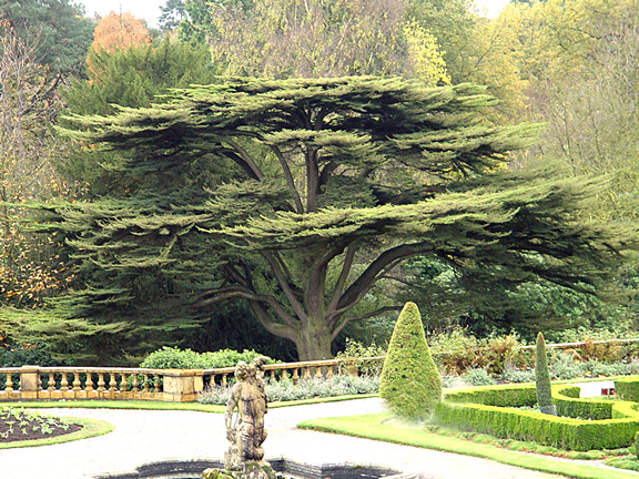 Cedars Of Lebanon ~ †mighty warrior † quot the cedars of lebanon which he