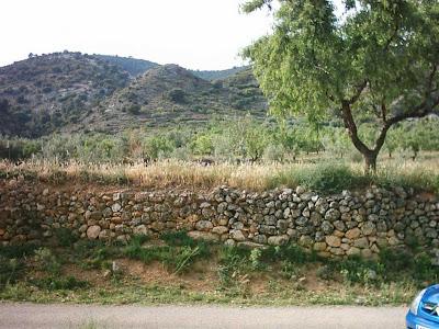 La pileta, camino, pantano de Pena, embalse, finca, almendros, olivos 28