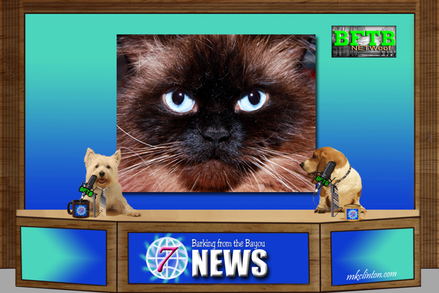 BFTB NETWoof News set with two dogs anchoring and cat on green screen