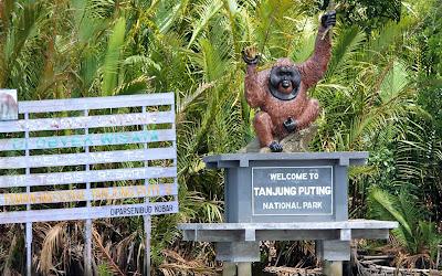 Serunya Berwisata di Habitat Asli Orang Utan di Taman Nasional Tanjung Puting Kalimantan Tengah