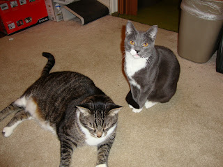 Bently the Diabetic Cat with Skye