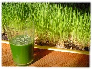 Le jus d'herbe d'orge: Un concentré de vitalité