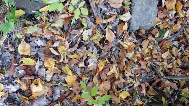 http://bibliopoemes.blogspot.com/2012/10/endevinalles-de-la-tardor-per-jugar-amb.html