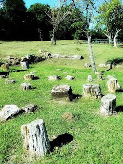 Jardim Paleobotânico - Mata (RS)