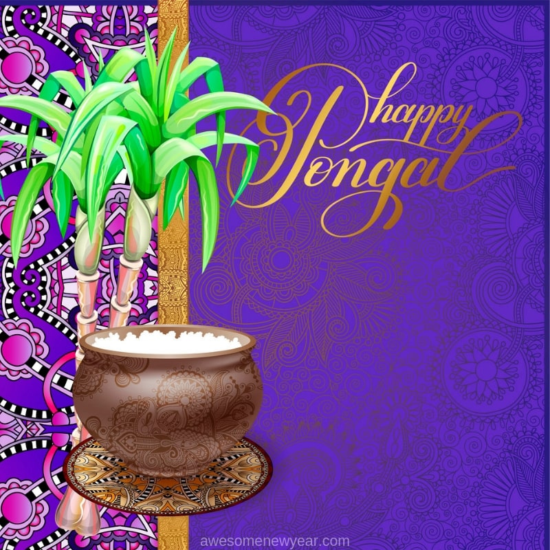 Happy Pongal 2019 Images