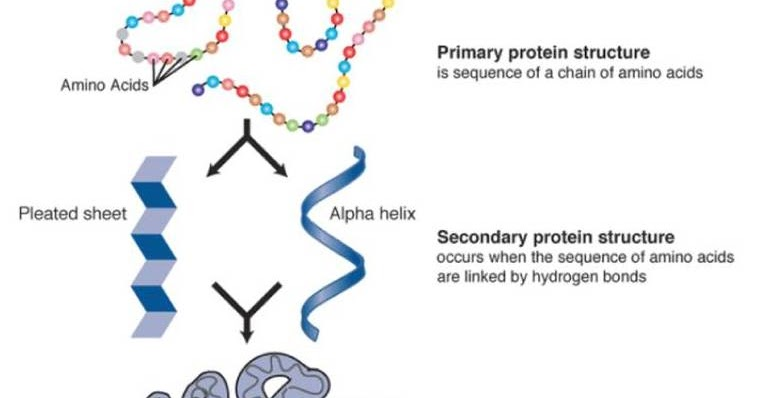 Difference Between Primary and Secondary Structure of Protein