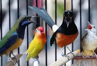 Suara burung di alam bebas