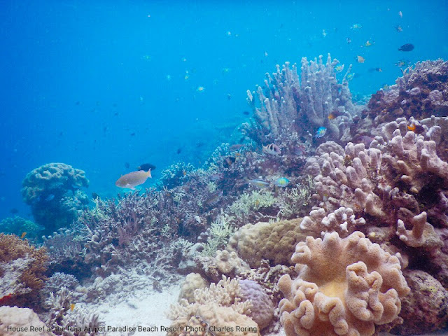 Coral reef and fish in Raja Ampat islands of West Papua.