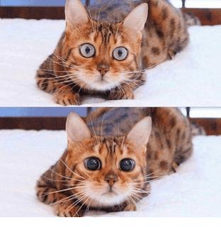 500 New Meme Compilation Cat Memesdog Memespets Memes