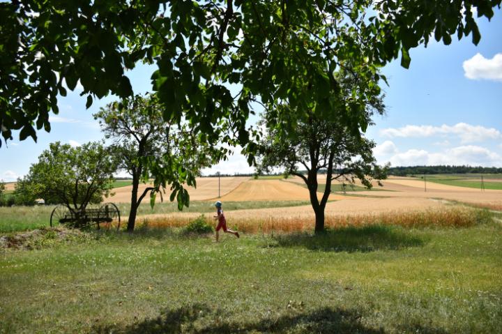 Weinviertler Feld im Juli