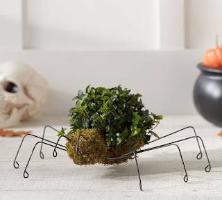 http://www.potterybarn.com/products/live-spider-topiary/?pkey=e%7Ctopiary%7C15%7Cbest%7C0%7Cviewall%7C48%7C%7C5&cm_src=PRODUCTSEARCH