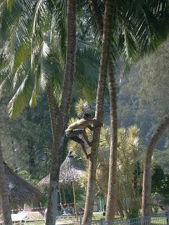 Cerita Rakyat: Angan-angan Mat Jenin