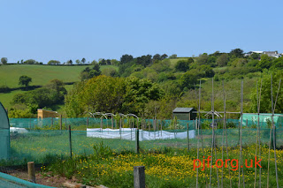 allotments landscape Cornwall