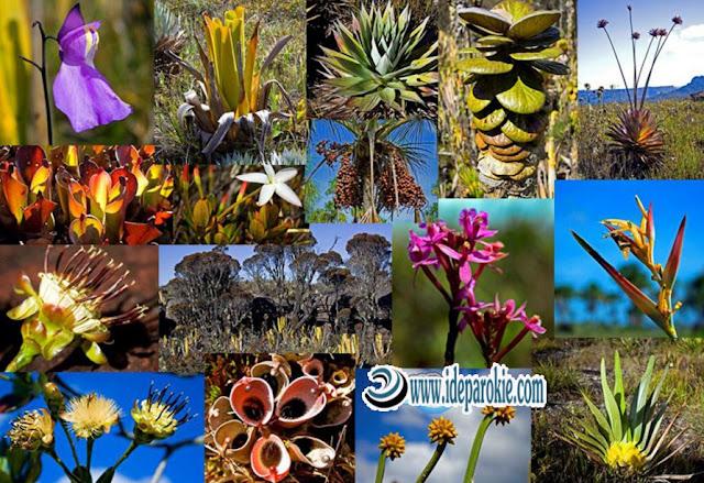 Tingkat Keanekaragaman Hayati Meliputi  Pengertian, Tingkat Gen, Spesies dan Ekosistem