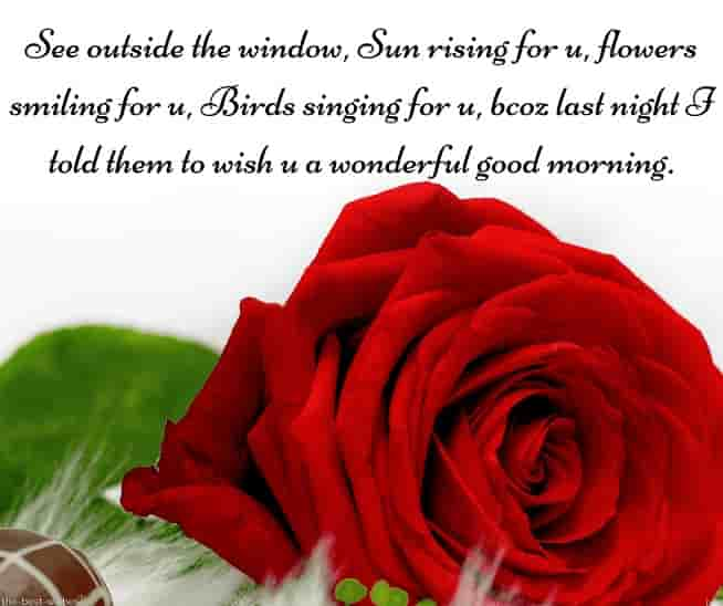 wish you a wonderful good morning sms with red flower