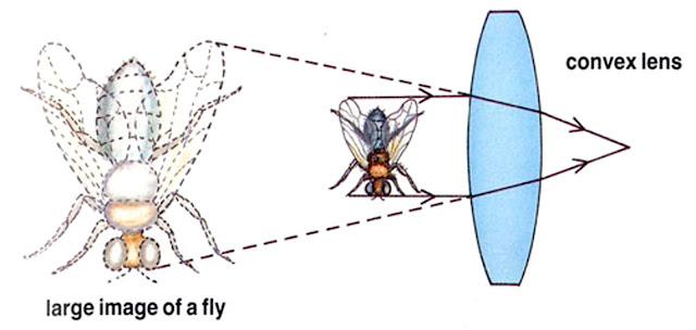 Lensa konvergen digunakan untuk membuat sesuatu terlihat lebih besar, atau diperbesar.