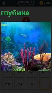 На большой глубине в прозрачной воде расположились кораллы и плавают разные рыбы