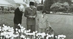 Gara-gara Soekarno, Ilmuwan Ungkap Rahasia Tanah Pembersih Liur Anjing,Dan Ternyata Hasilnya Mengejutkan
