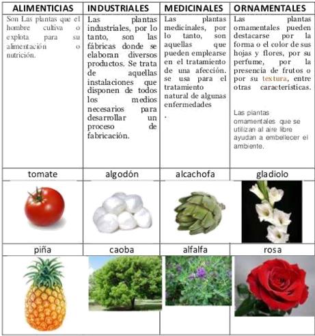 Imagenes De Plantas Segun Su Utilidad Marginal