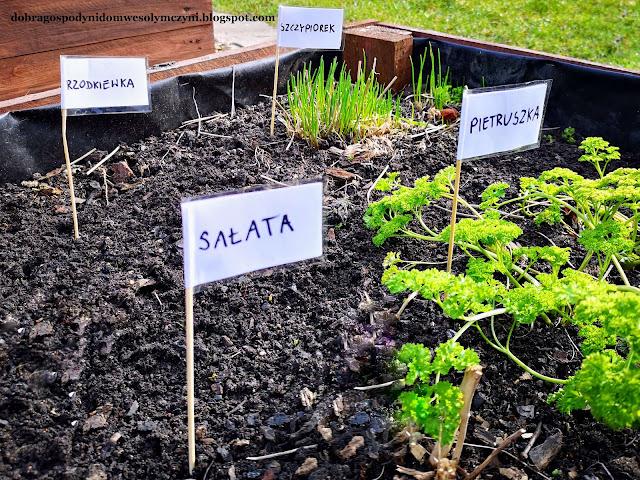 wodoodporne znaczniki do roślin, etykiety do rozsady, DIY, flagi do roślin, tabliczki do wysianych warzyw