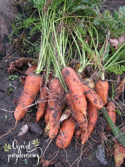 podsumowanie tegorocznych plonów, tegoroczne plony, tegoroczna uprawa, plony z warzywnika, ogród przydomowy