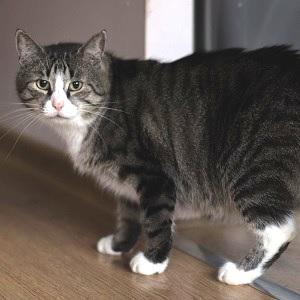 kot do adopcji Wroclaw