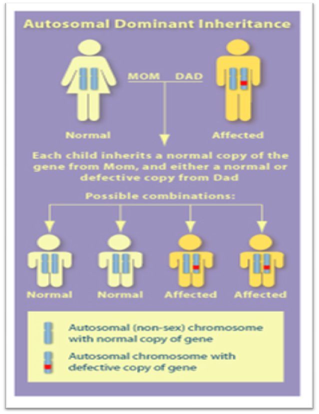 List Of Human Genetic Disorders  Biology Exams 4 U-1855