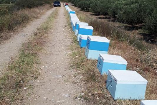 Η διαχείμαση του μελισσιού! Ένα πολύ επίκαιρο θέμα. Μέθοδος για υψηλά αποτελέσματα