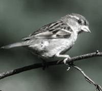 bird hindi moral story