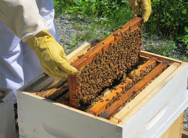 Ο βασικότερος παράγοντας - Για περισσότερα μέλια!!