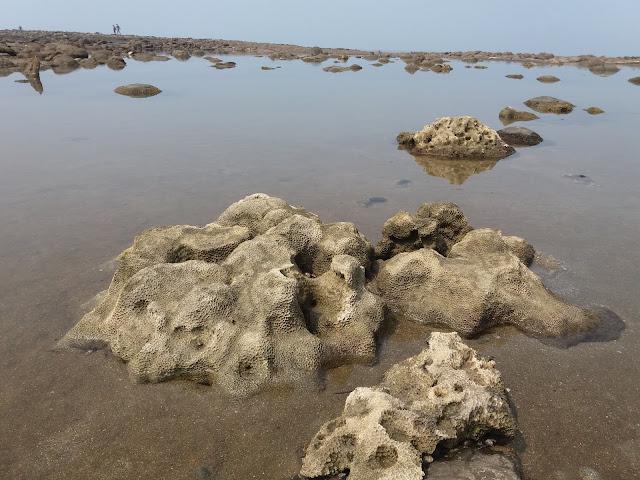 coral: the natural beauty of Chera Dwip