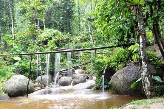 Rain Forest Inn
