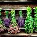 Δήμος Σουλίου: Χρήση Τεχνολογιών Πληροφορικής για την Ανάπτυξη της επιχειρηματικότητας στην παραγωγή και πώληση αρωματικών/φαρμακευτικών φυτών
