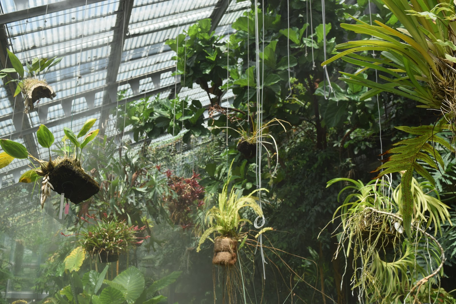 tropical room Real Jardín Botánico