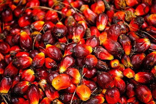 Agriculture Opportunities In Cross River State Palm Kernel2
