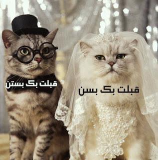 يا الله هههههههههههههه %D8%B5%D9%88%D8%B1+%