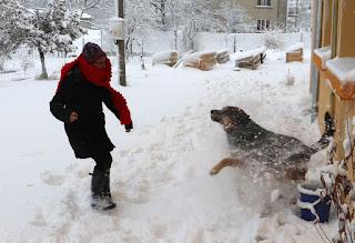 A kicking snow at Rambo, who loves it
