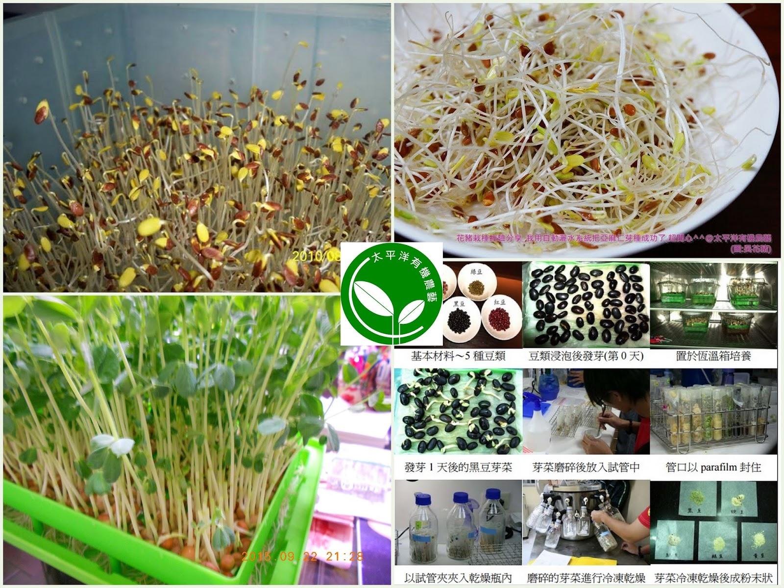 有機綠花椰芽菜苗 有機紫高麗芽菜苗 有機豌豆芽菜苗 有機小麥草(貓草)芽菜苗 有機空心菜芽菜苗 有機綠豆芽