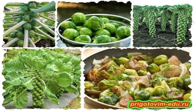 Как повысить урожай брюссельской капусты