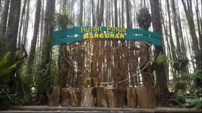 Ini Dia 11 Tempat Wisata Hutan Pinus Mangunan Jogja Yang Paling Hits