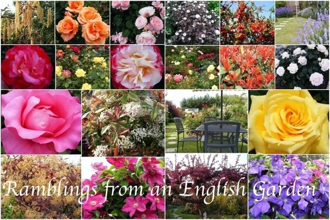 Ramblings from an English Garden