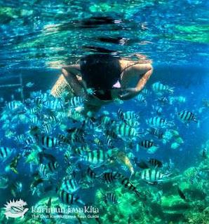 Snorkeling Karimunjawa Awal November 2017