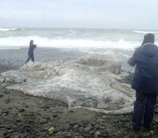 gumpalan misterius di pantai