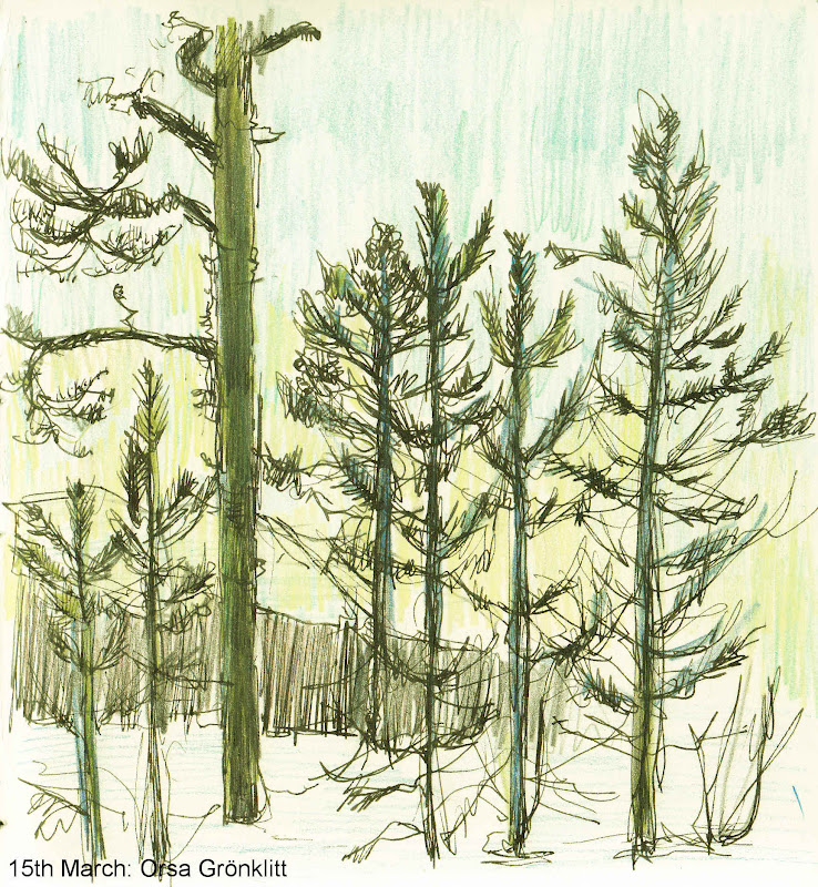 A Drawing A Day: 15th- 18th March: pine trees, snow and ...